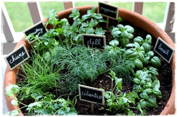 家庭菜園健康⑤