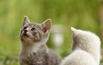向かいあった2匹の猫の画像