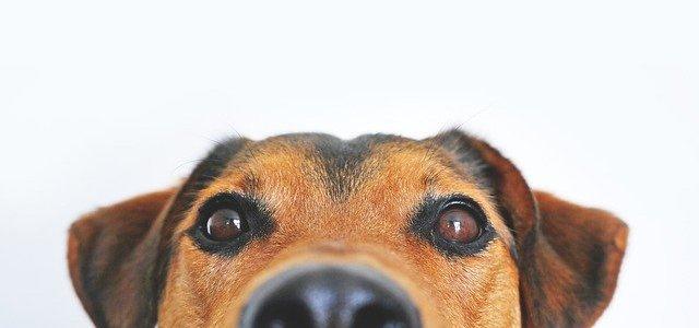 犬の顔をアップにした画像