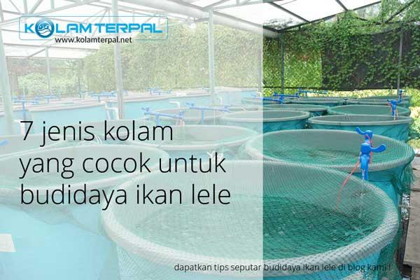 7 Jenis Kolam yang Cocok untuk Ikan Lele