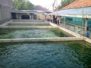 kolam beton