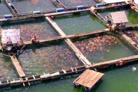 kolam keramba