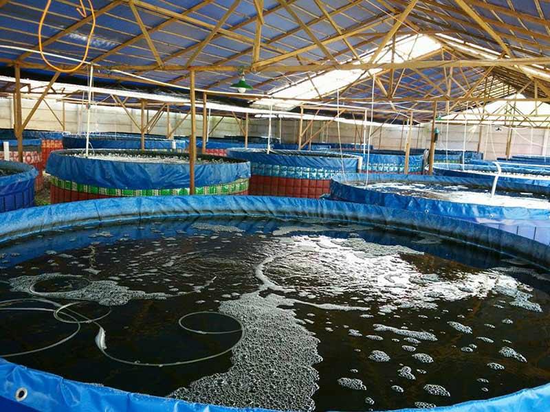 Image Result For Harga Wiremesh Untuk Kolam Ikan