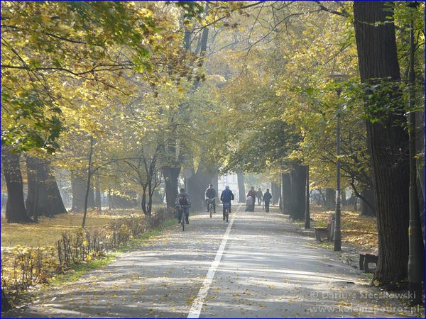 Aleja Lompy (w parku)