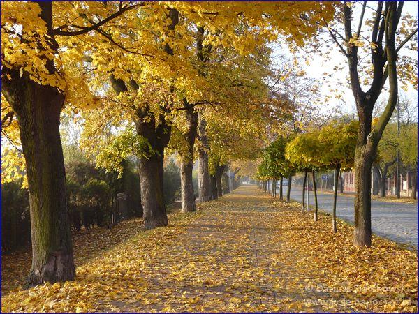 Chodnik przy ulicy Dąbrowskiego prowadzącej do schroniska