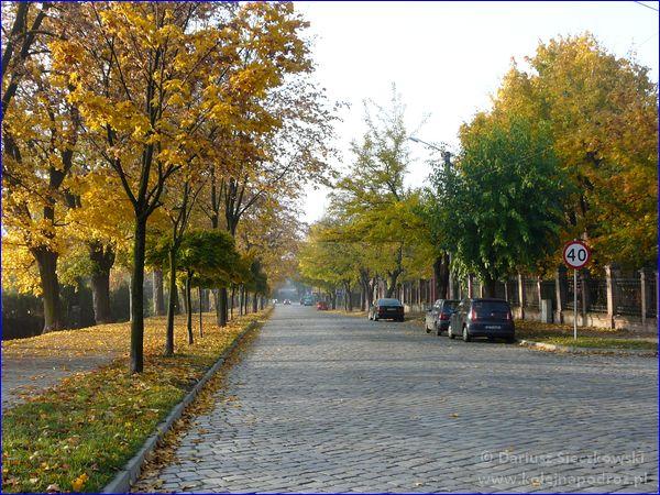 Ulica Dąbrowskiego przy schronisku
