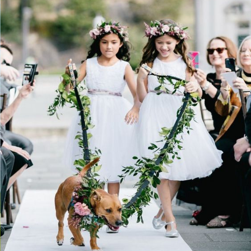 Flower girls walking down the aisle with pet on wedding day