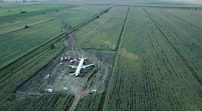 A321 севший на кукурузное поле