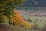 Jön immár az ismerős Szél lábú deres ősz. Sepreget, kotorász, Meg-megáll, lombot ráz.