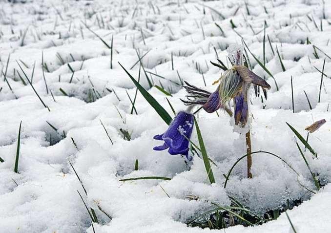 15 фотографій, в яких пробивається весна (5)