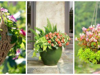 Квіти в горщиках 22 цікаві фото-композиції