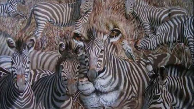 Яку тварину ви побачили на картинці першою? Відповідь розповість про ваші приховані риси