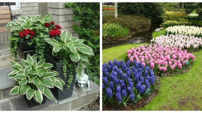 Красиві комбінації рослин. Поєднання кольорів рослин (ФОТО)