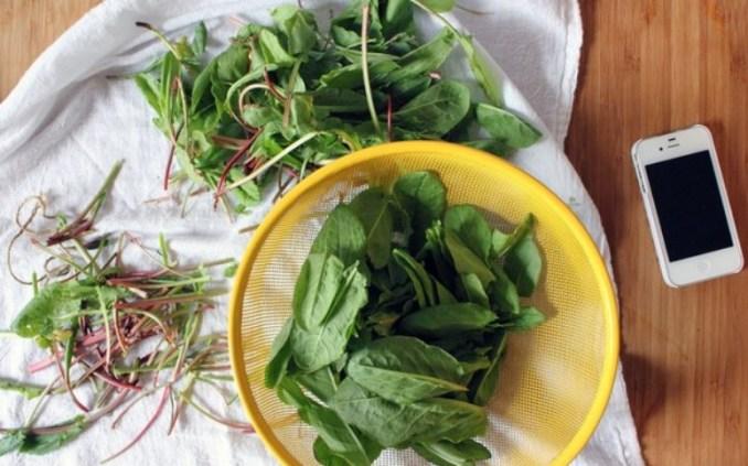 Як готувати щавель: 7 рецептів і корисні властивості