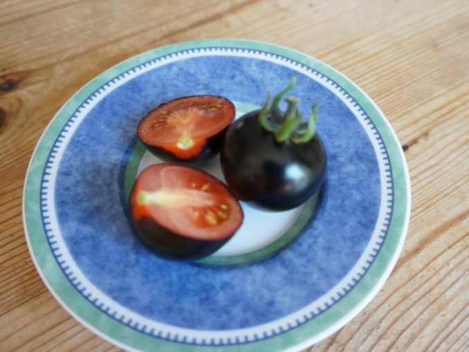 Сині помідори, або анто-помідори на вашому городі — екзотика і дуже корисно