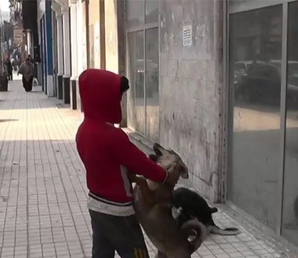 احمد ابو هشيمة و الطفل الراقص مع الكلاب