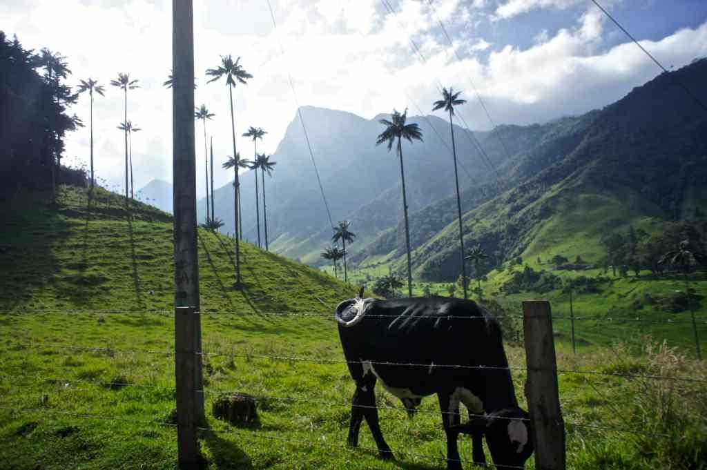 Salento und Valle de Cocora – Reisebericht, Tipps und Informationen
