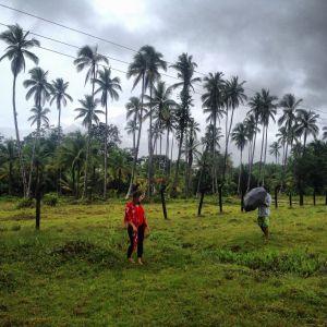 Palmen Nuqui Kolumbien
