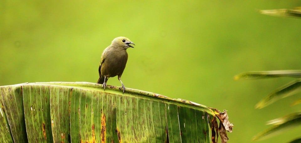 Leticia – ein Juwel am Rande des Amazonas