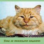 Уход за пожилыми кошками