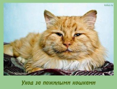 старая кошка доме