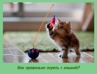 Как правильно играть с кошкой