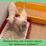 Наполнитель для туалета кошки: как правильно выбрать?