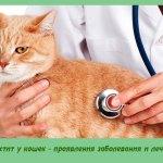 Мастит у кошек — проявления заболевания и лечение