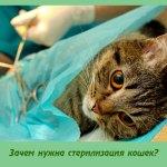 Зачем нужна стерилизация кошек?