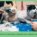 Нужна ли кошатнику машинка для стрижки кошек
