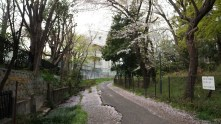 1. Entering the campus through the South-West gate feels like entering a forest. And yet, once you are walking on this worn road, a river on your left and a copse on your right, you are inside the Komaba campus of the University of Tokyo.