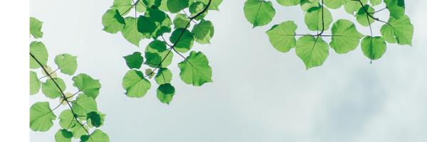 木の葉の画像
