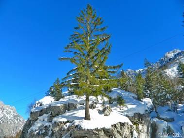 Valbona Valley in Winter (15)
