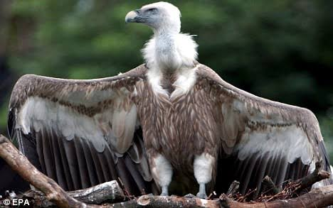 News How Vulture Delivered Letter Asking Monarch To Quit Throne In Akwa Ibom