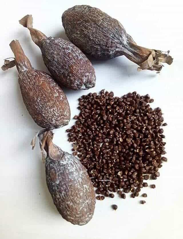 Spiritual Meanings Of Alligator Pepper
