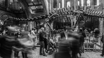 "Frank Brehe ""Natural History Museum II"""