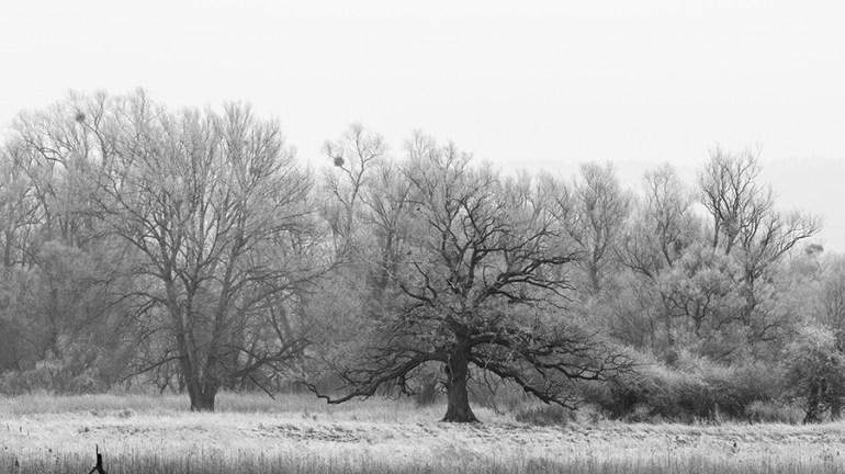 "Frank Brehe ""Nationalpark Unteres Odertal I Criewen"""