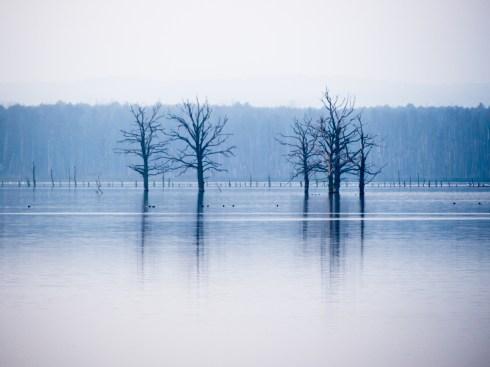 """Sven Jankowski """"Bäume"""""""