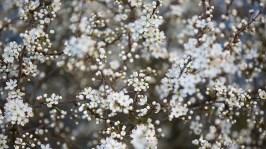 "Frank Brehe ""Blüten"""