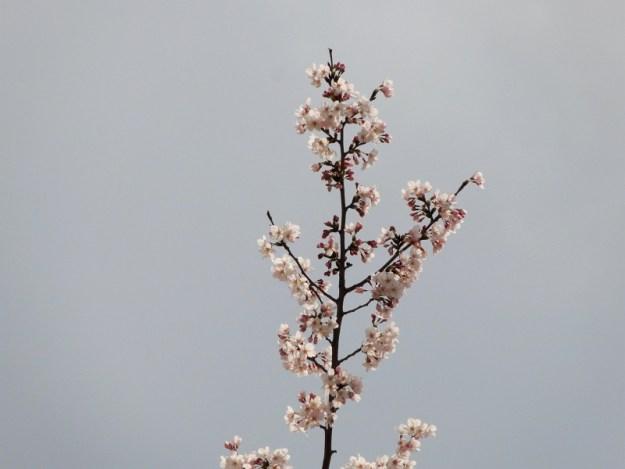 2012-03-30 14_21No(0002)