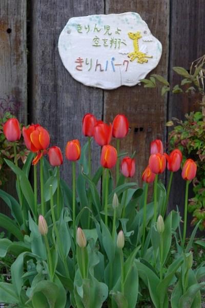 2013-04-03No-0002-