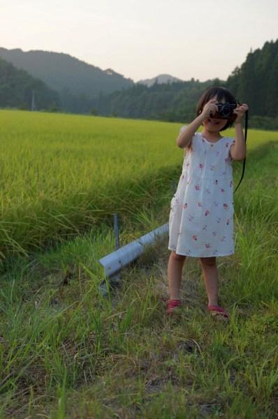 石川農園の圃場 2013年8月