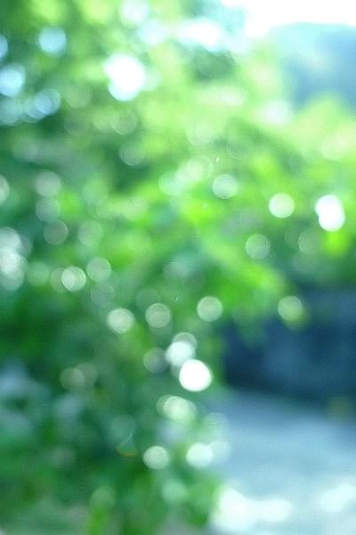 有機農業講座11 ミカンの木