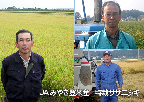 JAみやぎ登米・特栽ササニシキ