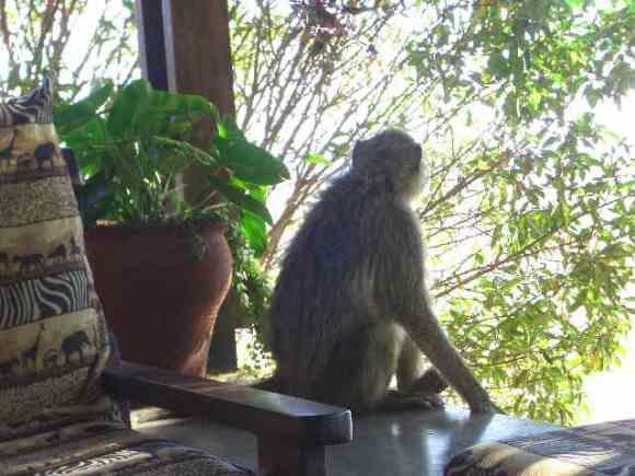 お猿さんの背中