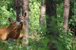 Forstamt Villingen Schwenningen Waldtiere