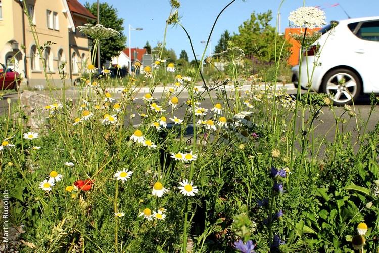 Wie hier in Radolfszell am Bodensee, gilt es auch anderswo als gute Lösung, runde und andere Verkehrsinseln mit Wildblumen zu bepflanzen.
