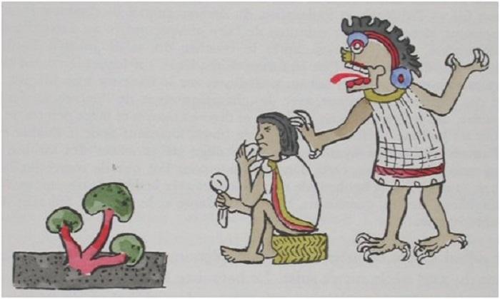 Nanacatl, los hongos sagrados