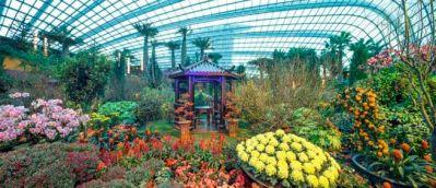 растения в сингапурском саду