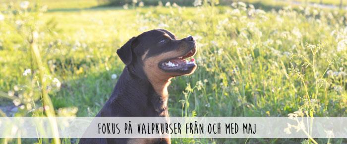 bannerbild_valpkurser allmänt